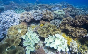 ocean-depths-900x1440